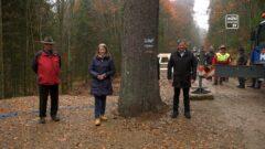 Christbaum für Wien aus Klaffer am Hochficht