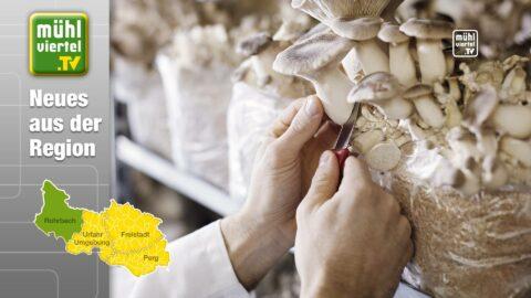 HERMANN ist größter Pilzverarbeiter des Landes