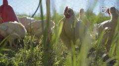 Wie funktioniert die Bio-Landwirtschaft?