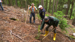 Baumpflanz-Aktion vom Rallye-Club Mühlviertel