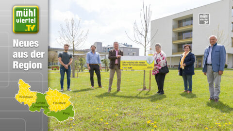 """Aktion """"Generationenbaum"""" in Perg und Urfahr-Umgebung"""
