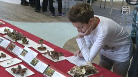 Pilzausstellung in Haslach