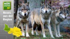 Tierpark Altenfelden – die Wölfe sind zurück