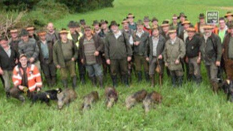 Seltenes Jagdglück in Nebelberg – fünf Wildschweine am Stück