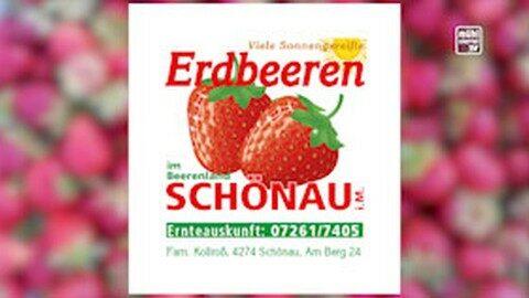 Erdbeerland in Schönau im Mühlkreis