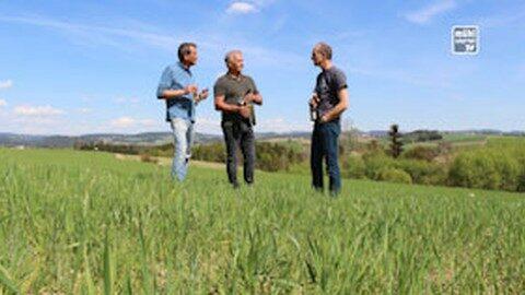 Erstes Bio Weizen aus 100 % Mühlviertler Rohstoffe