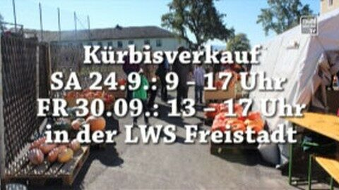Kürbisverkauf in der Landwirtschaftsschule Freistadt