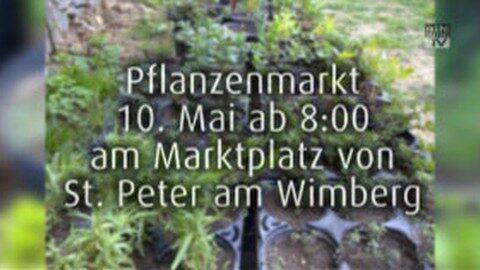 Ankündigung Pflanzenmarkt in St. Peter am Wimberg