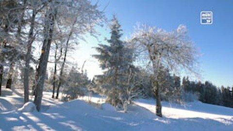 Winter im Mühlviertel 2019