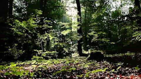 Einblick in die Waldwirtschaft des Stiftes Schlägl